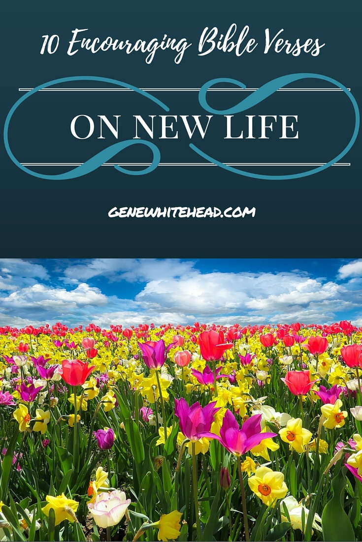 When seasons change, the visible changes are a reminder of what God's Word says about transition. In Springtime, it's new life. Here's 10 renewing Bible verses to encourage you. #Christian #Faith #Bible #Encouragement #NewLife
