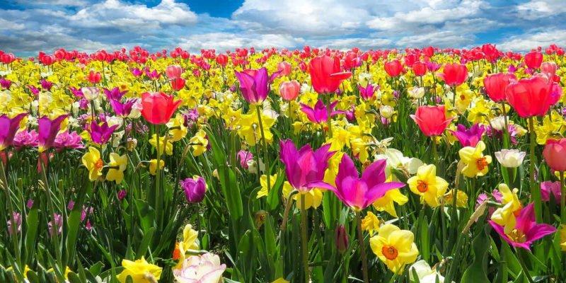 new-life-spring