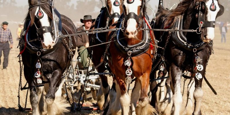 man plowing field with team of horses